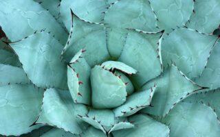 5 onderhoudsvriendelijke kamerplanten